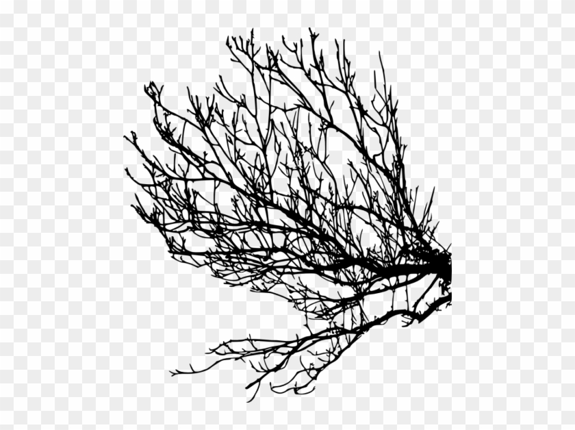 Free Png Tree Branches Silhouette Png Images Transparent - Portable Network Graphics #28980