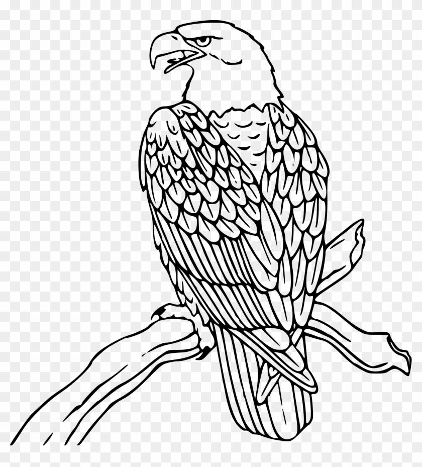 Eagle Drawing - Clip Art Black And White Eagle #29012