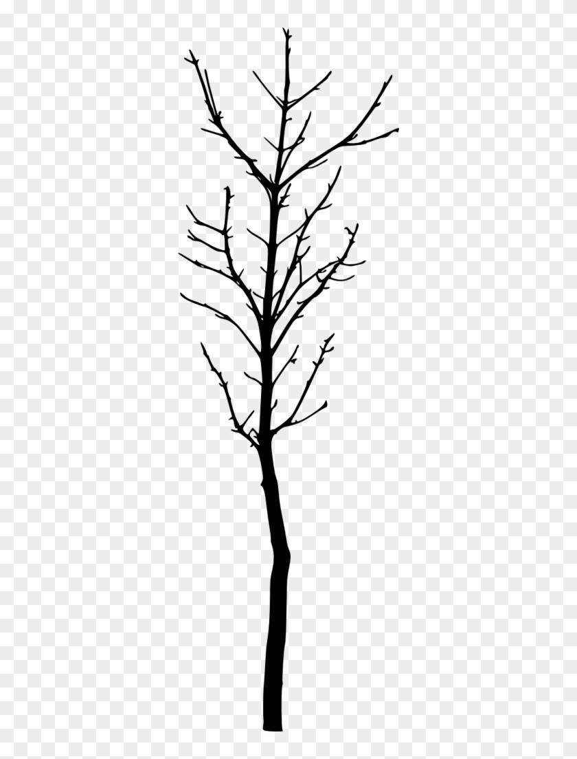 426 × 1353 Px - Tree #29018