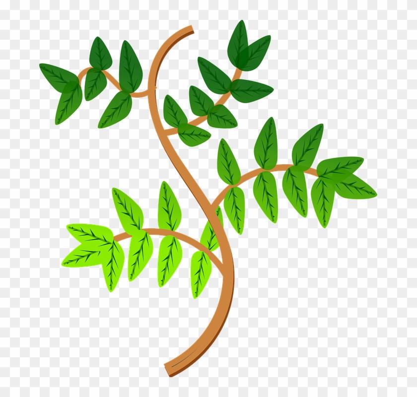Branch Clipart Leave - Ramas De Una Planta #29153