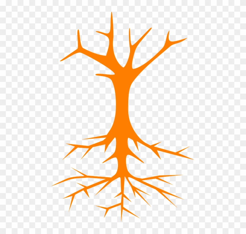 Tree Roots Stem Branches Naked Bare Cross Section - Tree Clip Art #29220