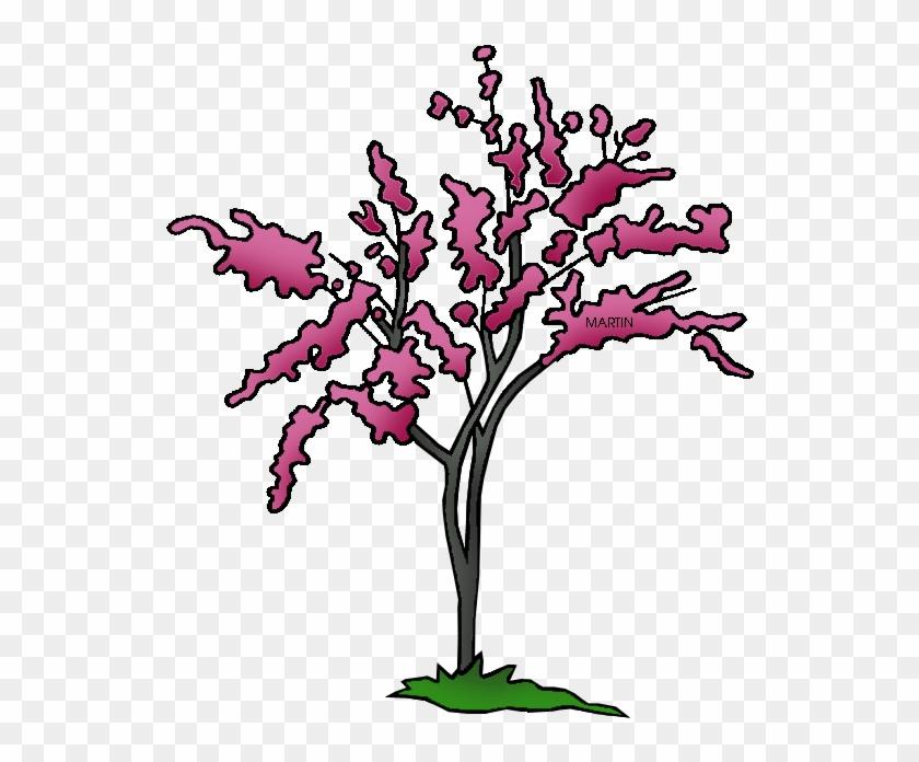 State Tree Of Oklahoma - Oklahoma State Tree Png #29363