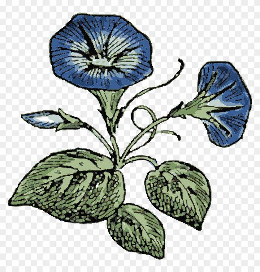 Similar Clip Art - Morning Glory Flower Vector #29665