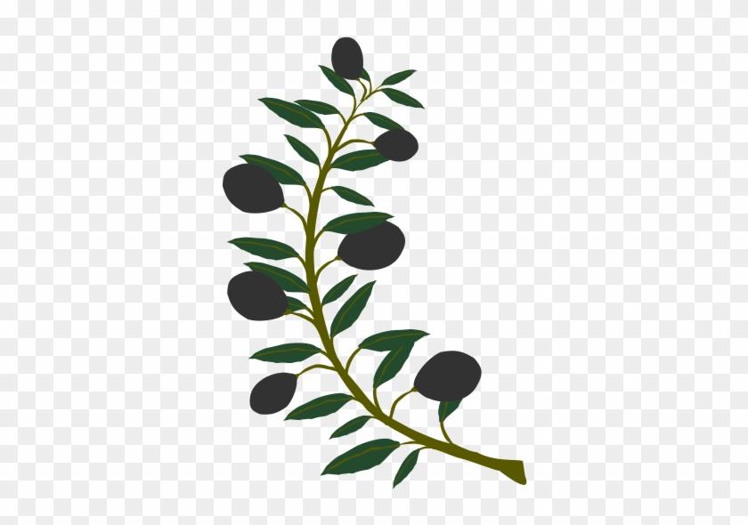 Free Olive Branch Black Olive - Olive Tree Branch Clipart #29707