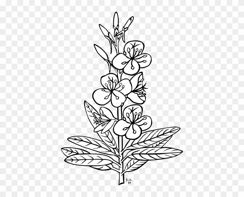 White Flower Clipart Flower Tree - Outline Pictures Of Flowers #29770