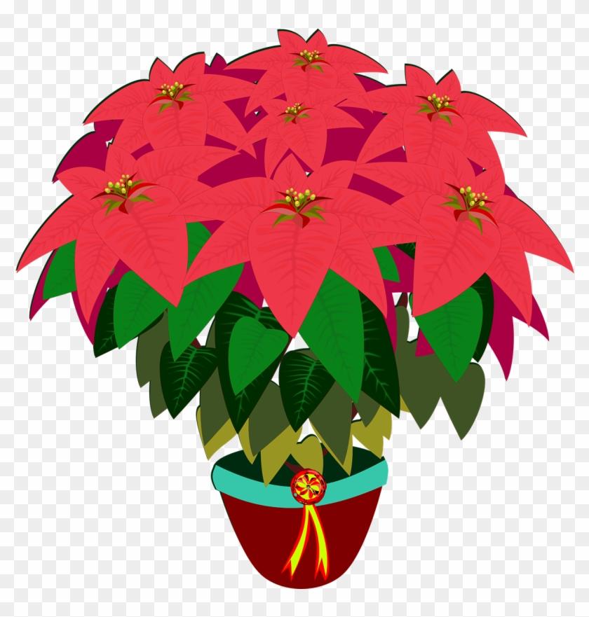 Bico De Papagaio, Clip Art, Flor, Flora - Poinsettia #29798