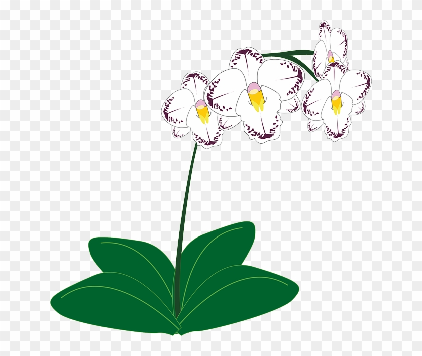 White Orchid, Flower, White - Clipart Orchid #29932