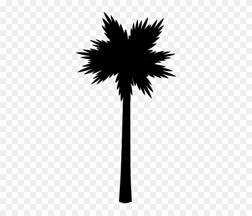 Palm Tree Clip Art #30060