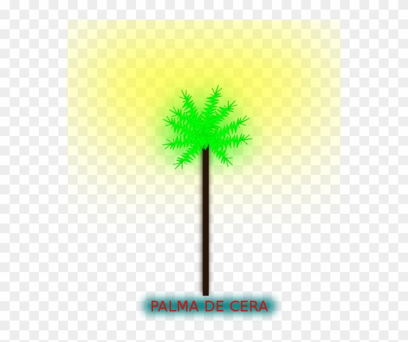 Palma De Cera Png Images - Sabal Palmetto #30070