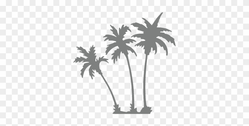 Palm Trees Background Overlay #30120