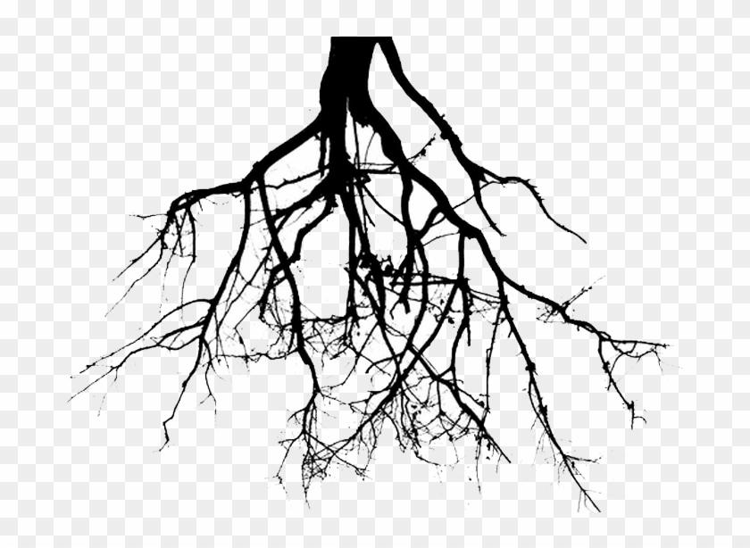 Roots Clipart Tree Png - Plant Roots Black And White #30395