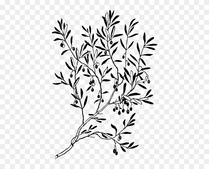 Olive Branch Png Images - Olive Branch Silhouette #30408