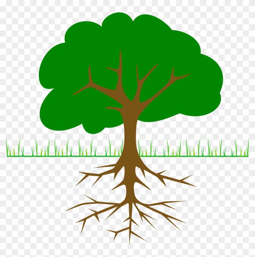 Roots Clipart Transparent - Tree Clip Art #30425