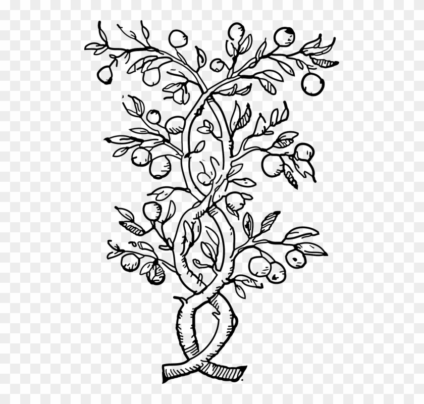 Plants Climbers Vines Black And White Leaves Stems - Olive Tree Coloring Pages #30489