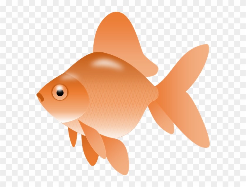 Smartness Gold Fish Clip Art Image Of Goldfish Clipart - Fish Clip Art Png Transparent #30515
