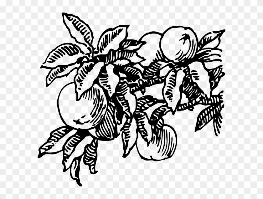 Peach Trees Black And White #30546