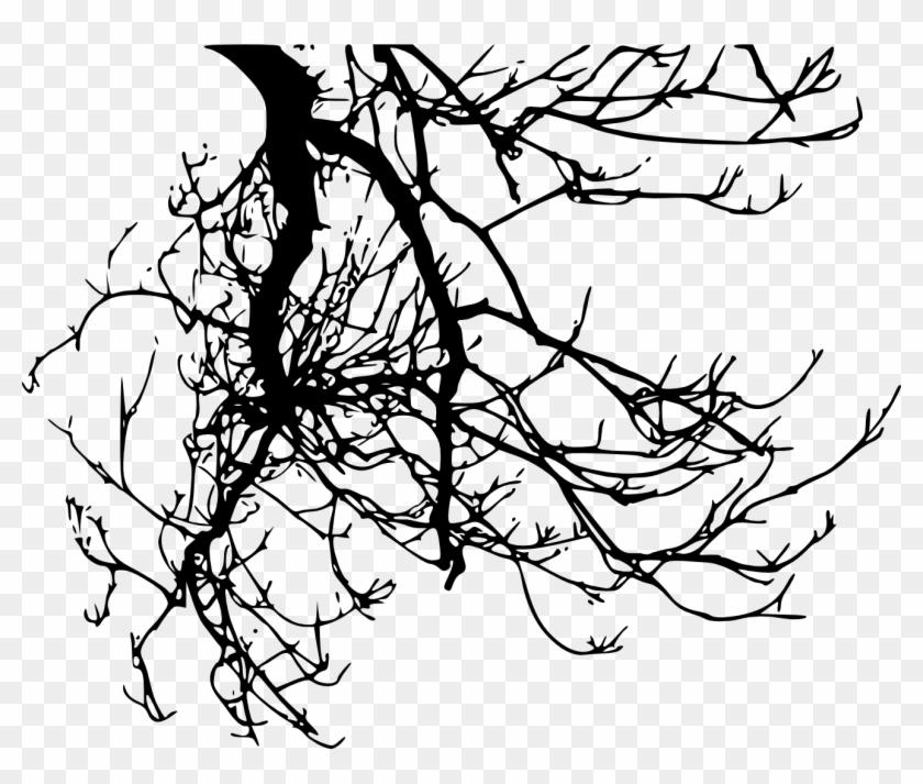 Silhouette Tree Branch - Branches Transparent #30644
