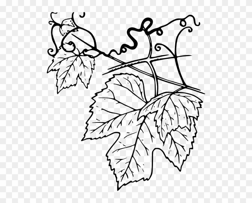 Plant Leaves Clip Art - Tendril Of A Plant #30828