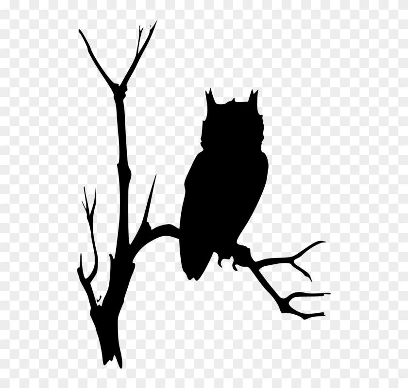 Owl Branches Tree Dead Eerie Watching Nature - Owl On Branch Silhouette #30954