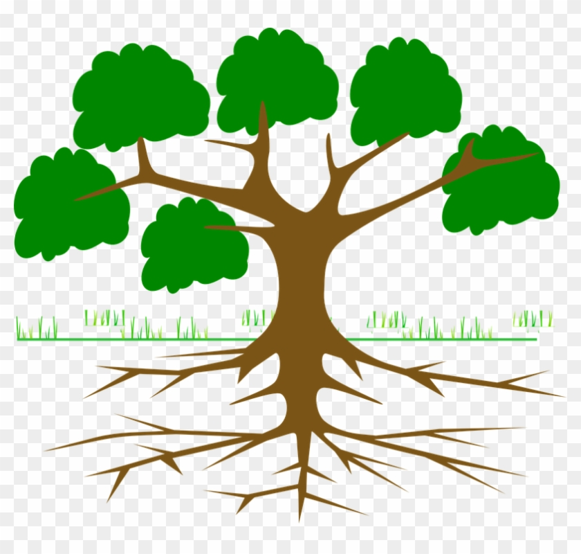 Tree Branches Root Eco Ecology Nature Plant - Environmental Movements In India #31025