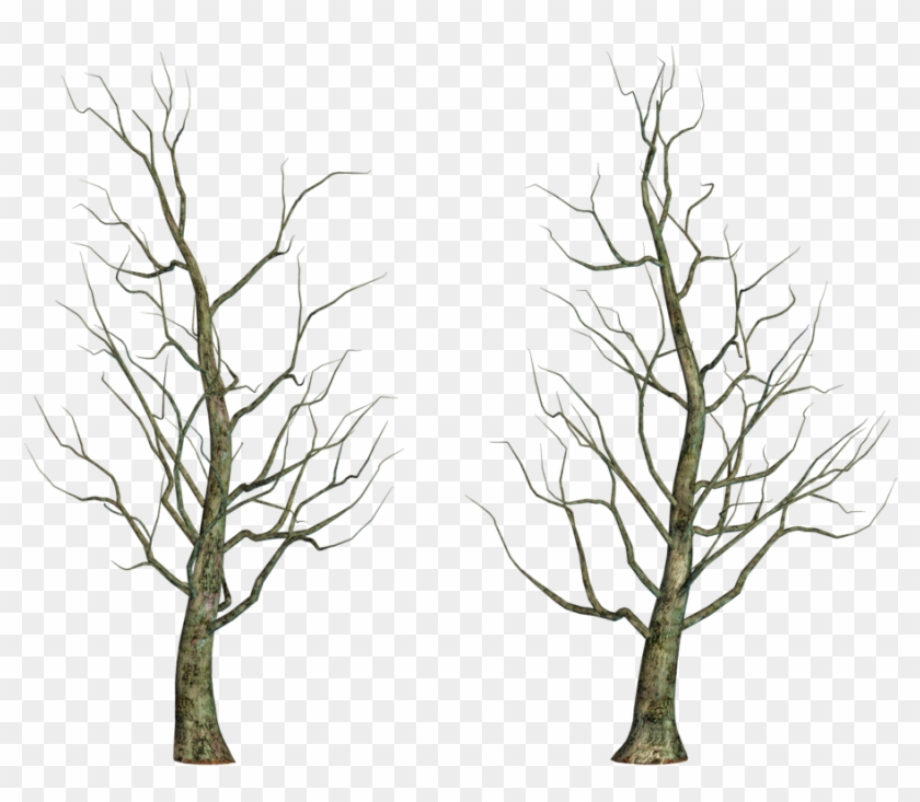Leafless Tree Png Images - Tree #31040
