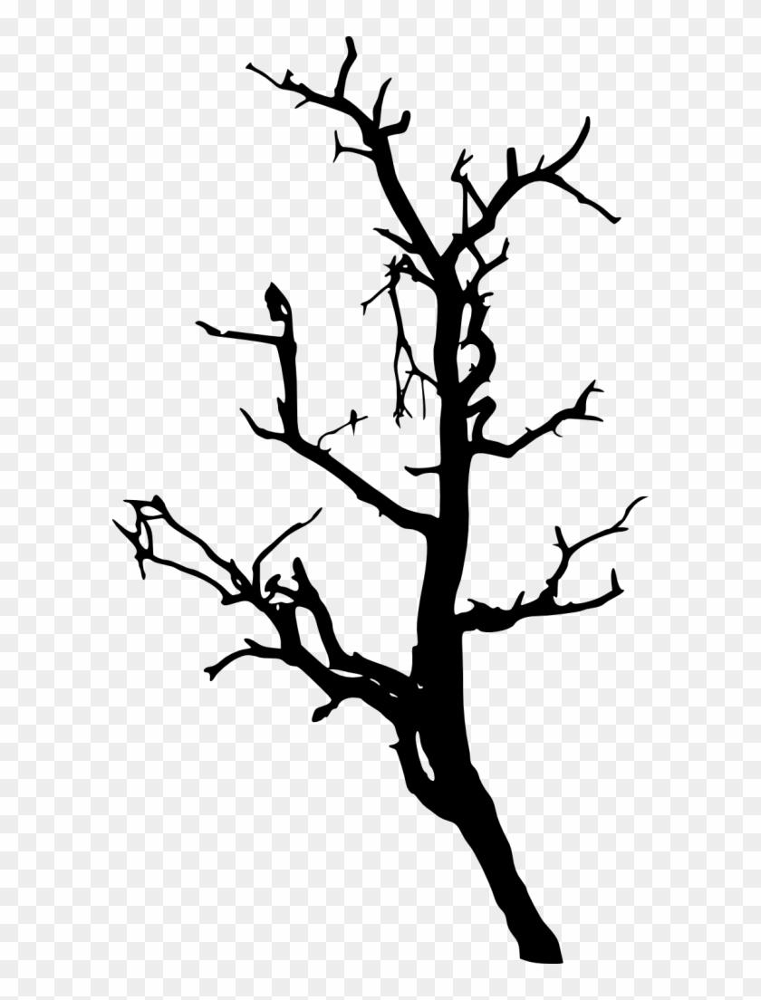 733 × 1500 Px - Tree #31049