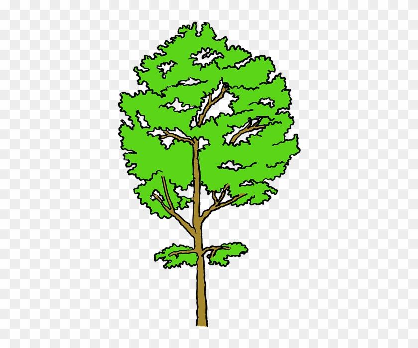Tree #31052
