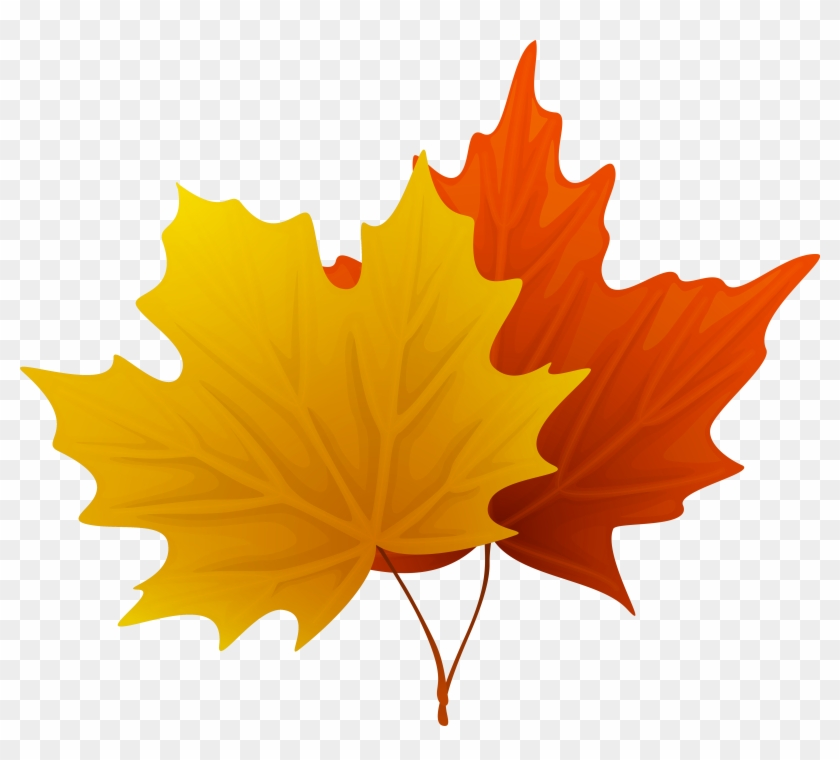Clip Art Maple Leaf Dromgco - Maple Leaf Clip Art #31290