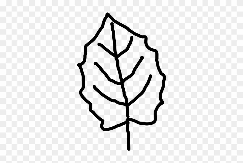 Leaf Outline Leaf Template Ideas Only On Leaves Clip - Maple Leaf #31655