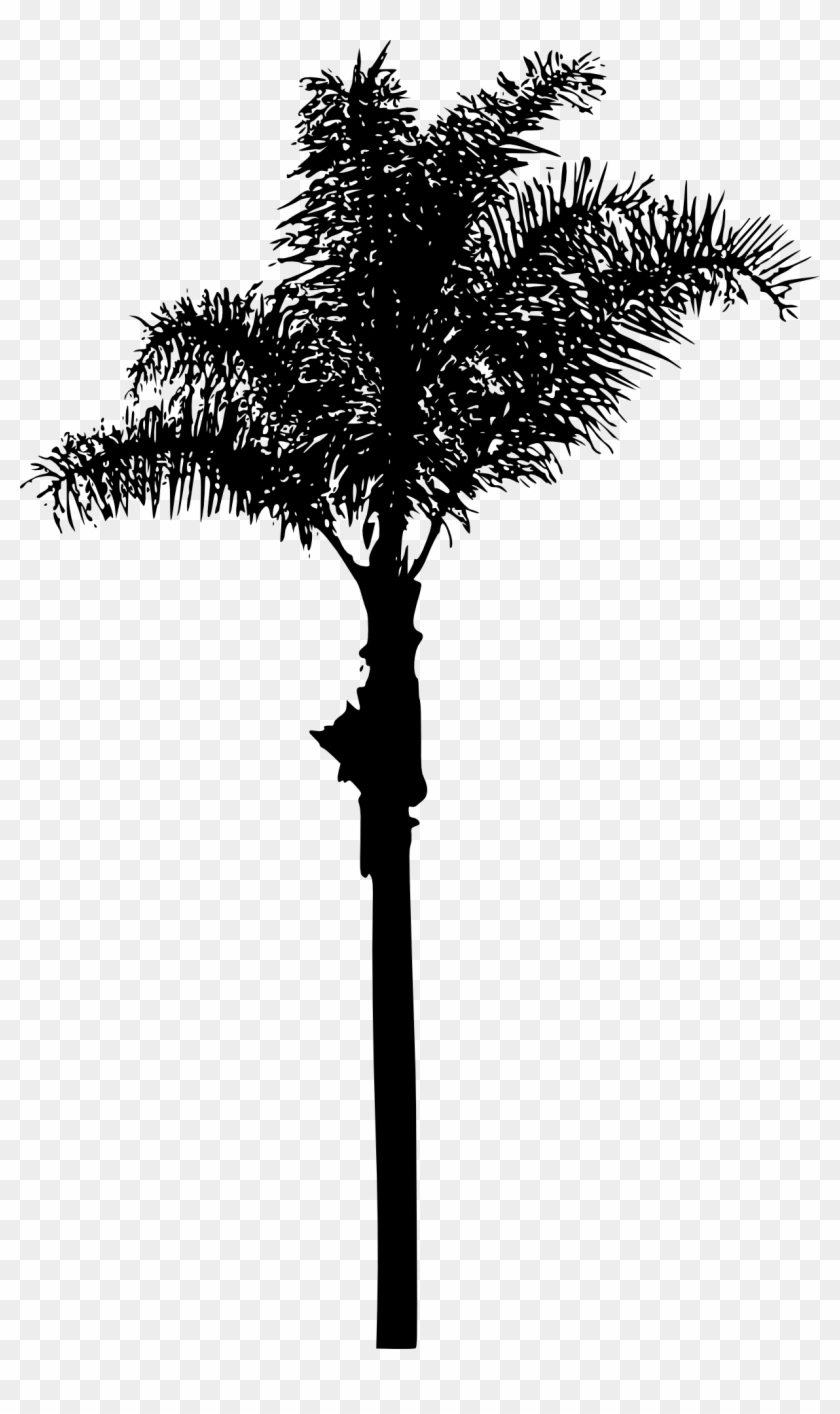 Free Download - Palm Trees #31842