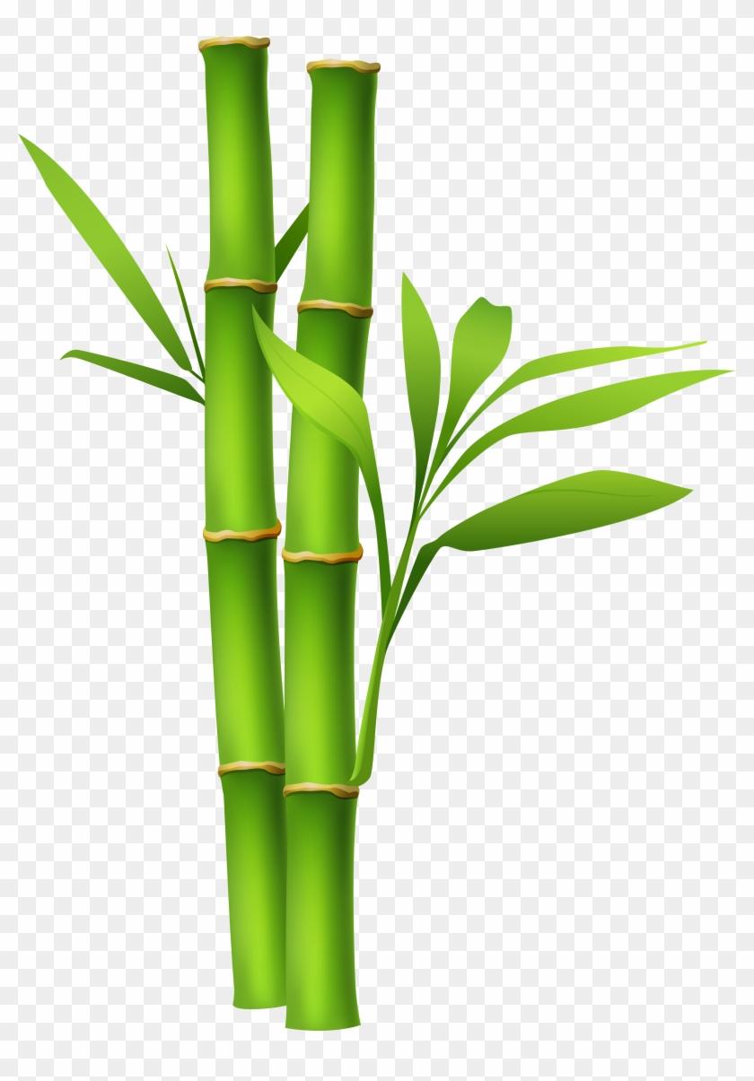 Bamboo Clipart Transparent - Bamboo Png #31850