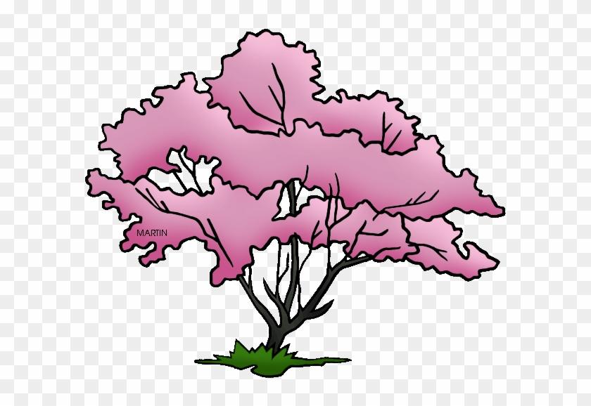 Missouri State Tree - Virginia State Tree Drawing #31846