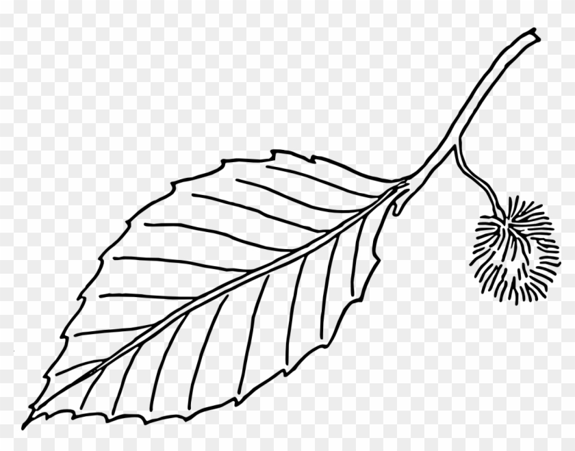 Clipart - Leaves - Black - And - White - Beech Leaf Outline #31914