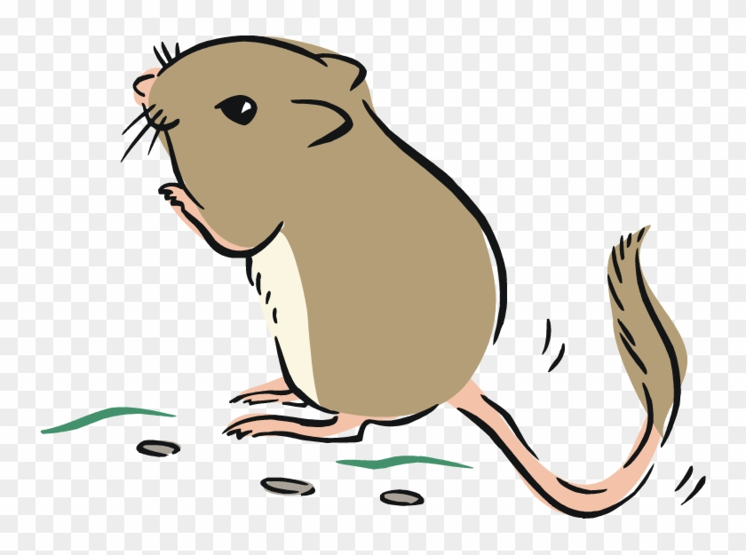Rat Ox Tiger - Kangaroo Rat Clipart #32330