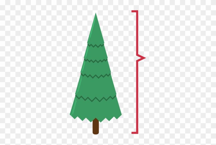 Christmas Tree Growers Sell The Shorn Whorls To Make - Christmas Tree #32497