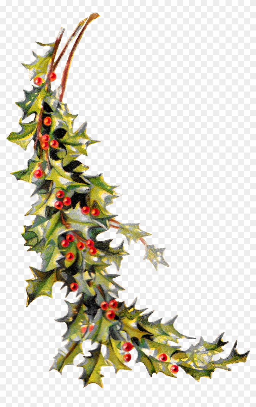 Christmas Holly Image Digital Clip Art Printable Crafting - Vintage Holly Png Transparent #32645