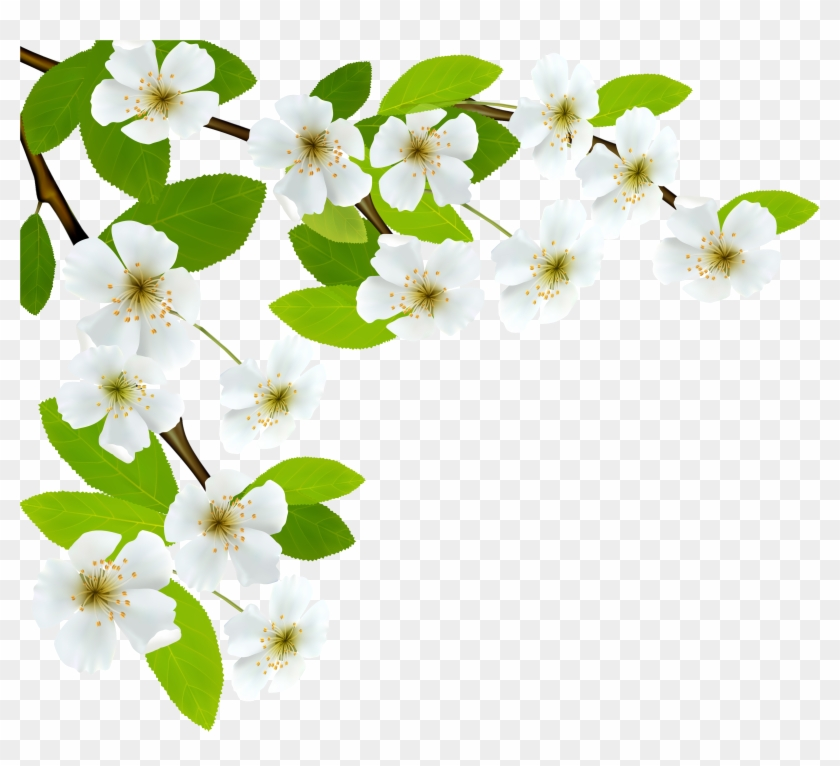 White Spring Branch Png Clipart Image - Branch Png Clipart #33044