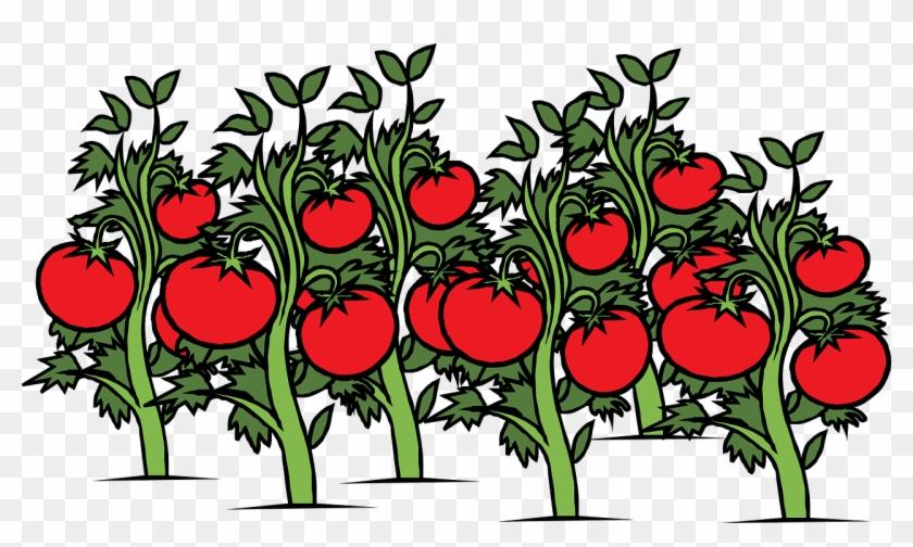 Plant Cliparts - Tomato Garden Clipart #33134