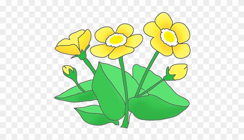 Buttercup Clipart - Clip Art #33220