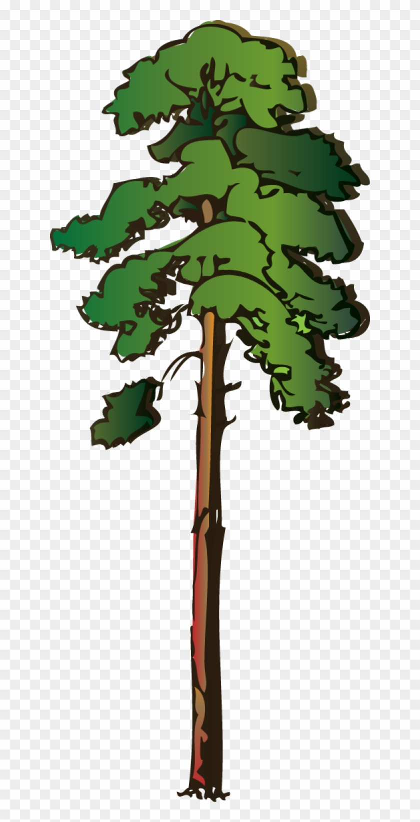 Tall Pine Tree Clipart - Red Wood Tree Clipart #33489