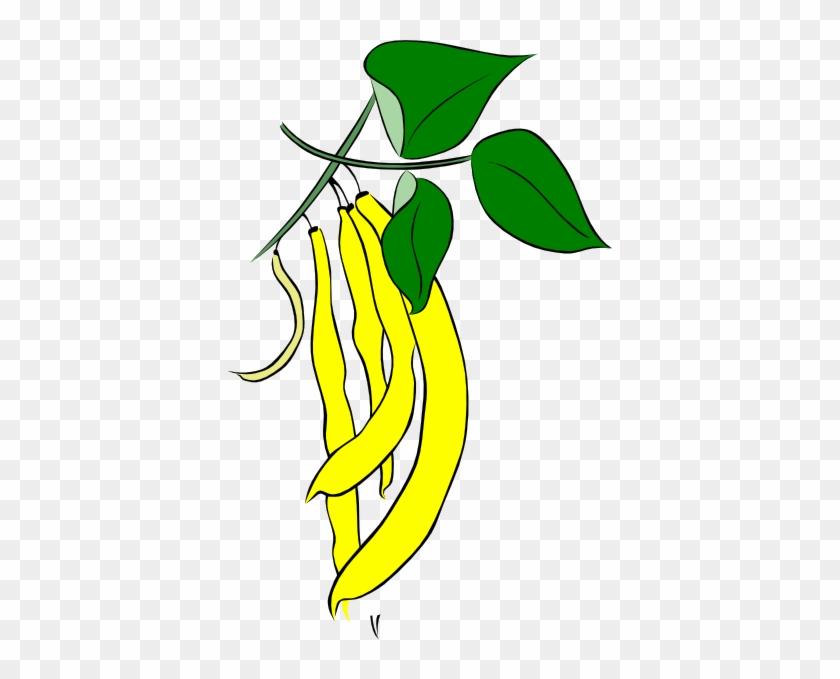 Bean Clip Art - Fasola Kolorowanka #33519