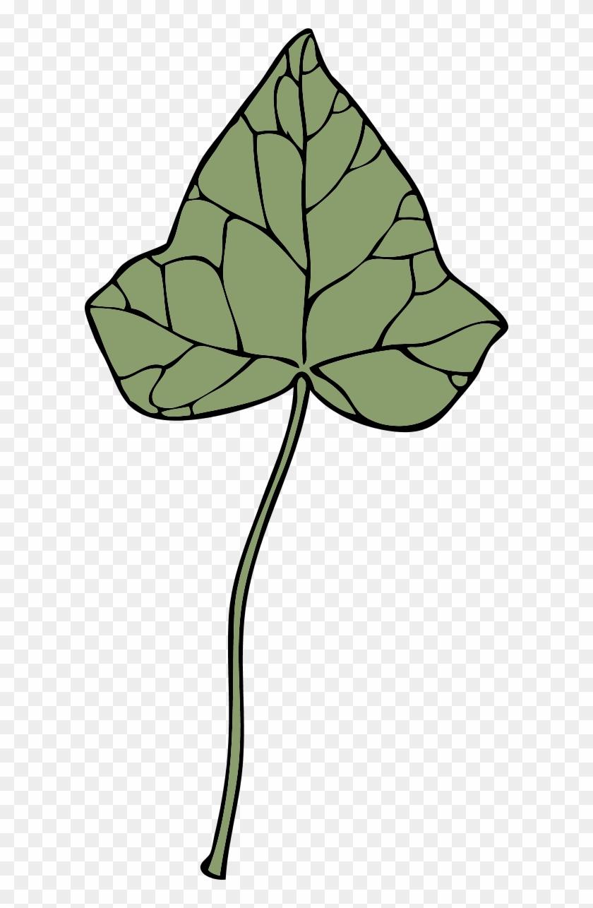 Ivy Leaf - Clip Art #33574