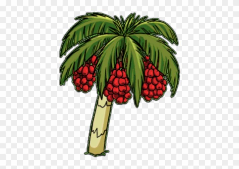 Palm Dates - Plantain #33646