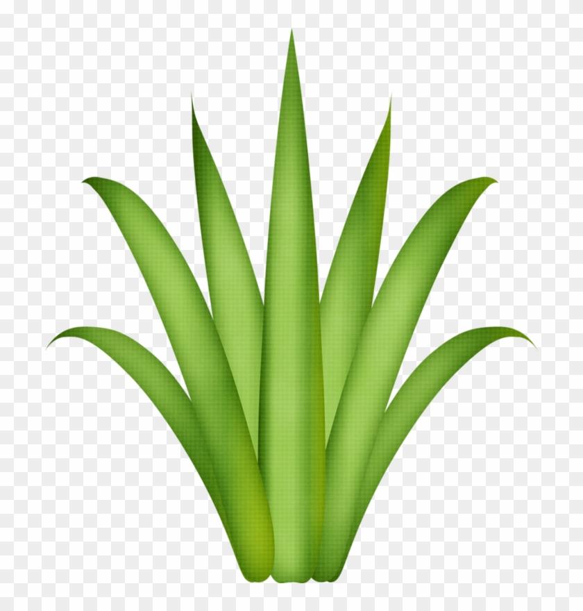 Drawing Treestree Drawingsflamingospaper Flowersgrassclip - Aloe Vera Plant Png #33740