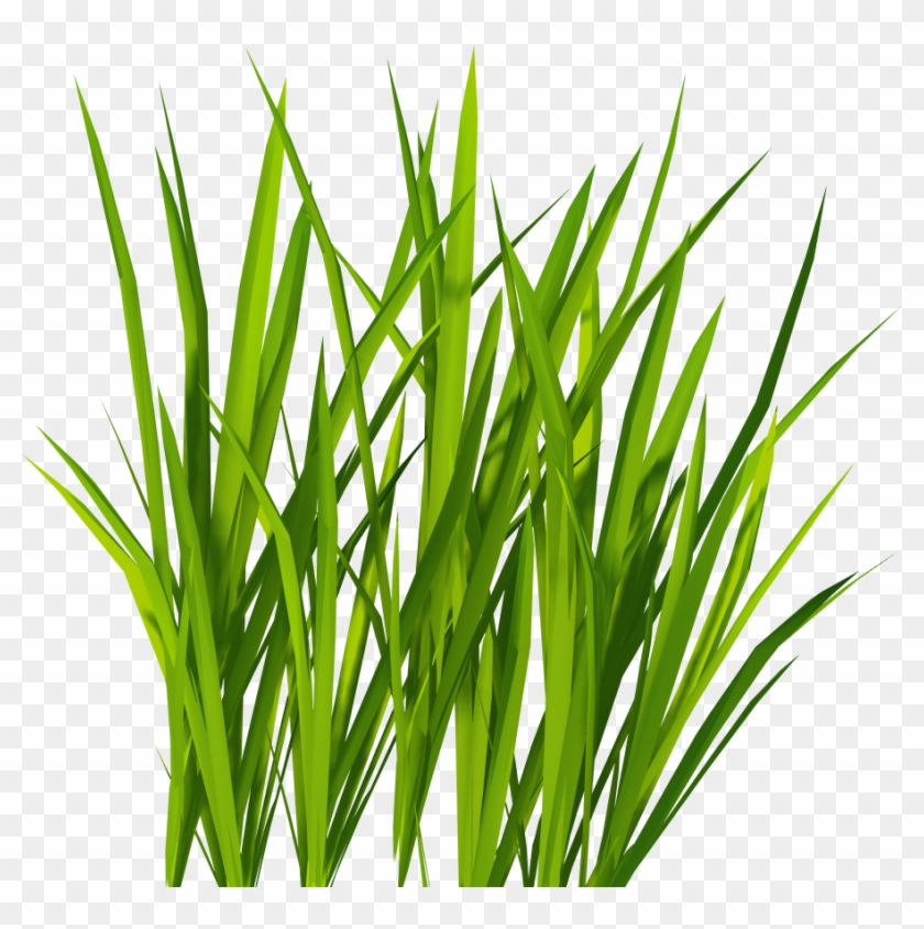 Grass Png Image, Green Grass Png Picture - Grass Png #33848