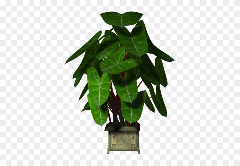 Garden Pot Plant - Macetas O Arboles Grandes En Pgn #34045