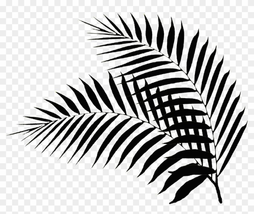 Palm Leaves - Black And White Palm Leaf Png #34559