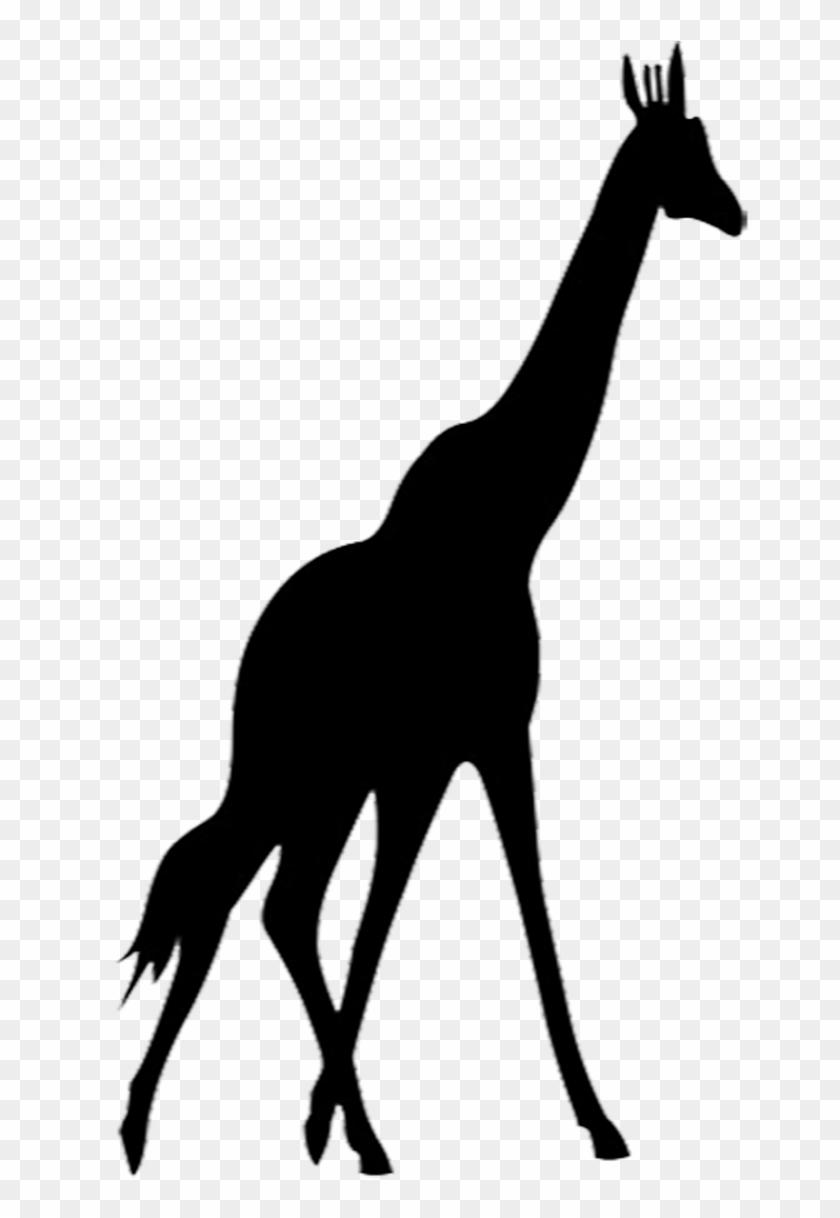 Giraffe Silhouette - Silhouette Giraffe Png #34860
