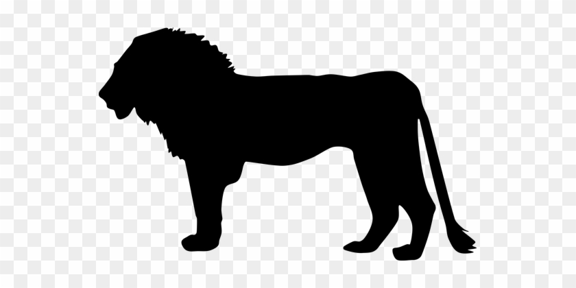 Africa Animal Big Cat Lion Silhouette Lion - Silhouette Of Lion #34877