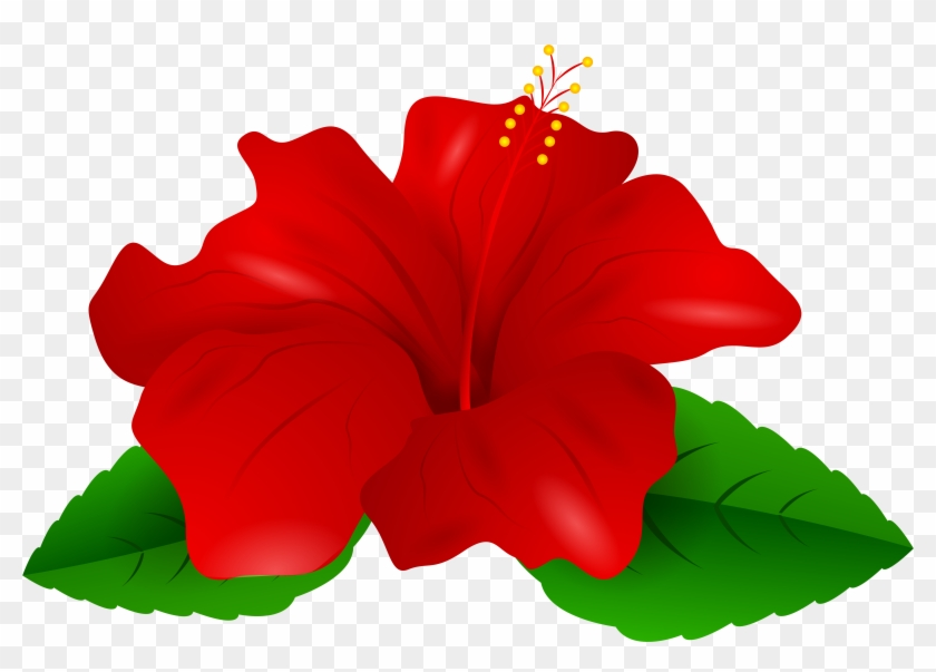 Hibiscus Clipart Red Hibiscus - Hibiscus Clipart #35018